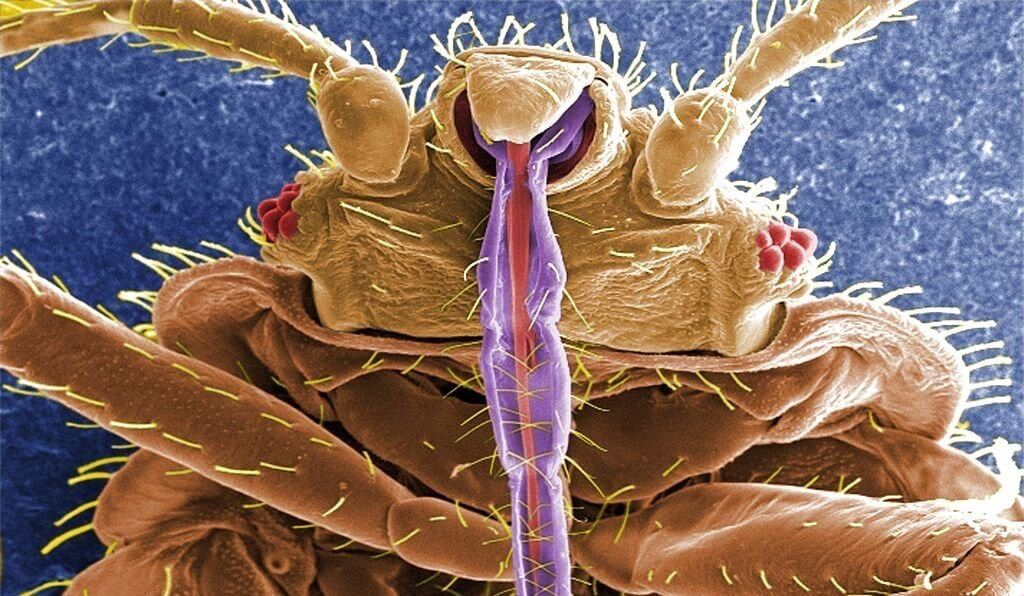 Bed bugs horrifying facts for hotel and lodging industry