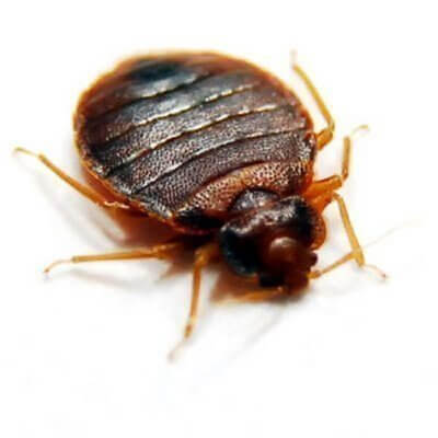 Pestco Pittsburgh Commercial Bedbug Removal Services