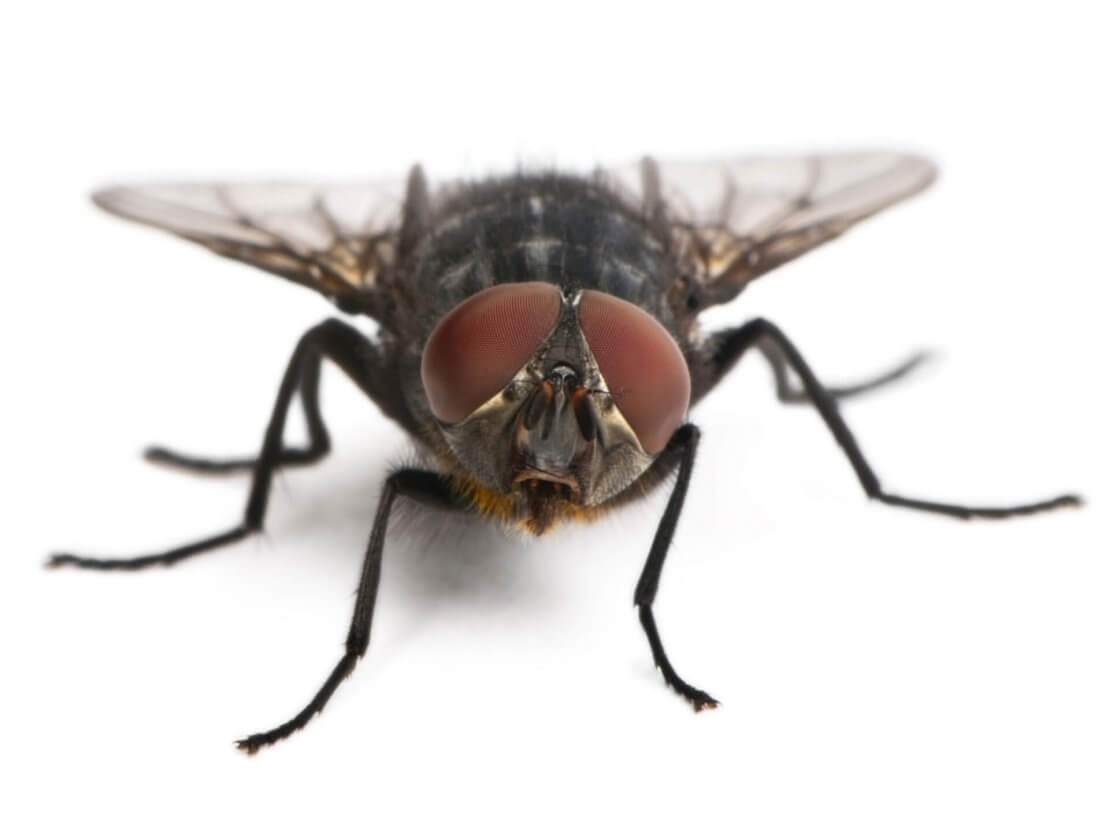 Pittsburgh Pestco Fly Control Services