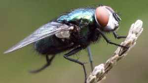 Pittsburgh Common Fly Control And Extermination