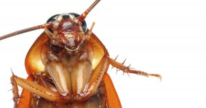 Pittsburgh Commercial Cockroach Extermination Services