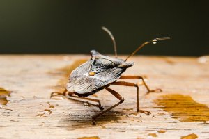 Pittsburgh Stink Bug Prevention Extermination Solutions