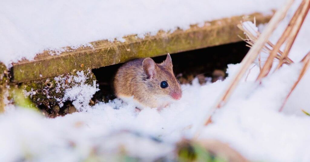 Pittsburgh Cold Weather Pest-Control-Services
