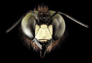 Pennsylvania Carpenter Bee Control And Extermination