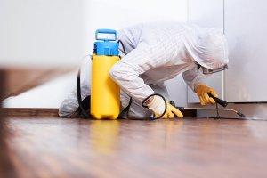 Pittsburgh PA Integrating Pest Management