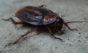 Pittsburgh Cockroach Control For Hospitals