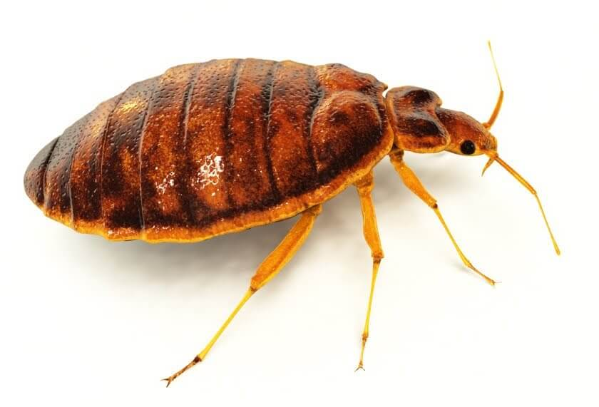Pittsburgh Pin Point Bed Bug Elimination Services
