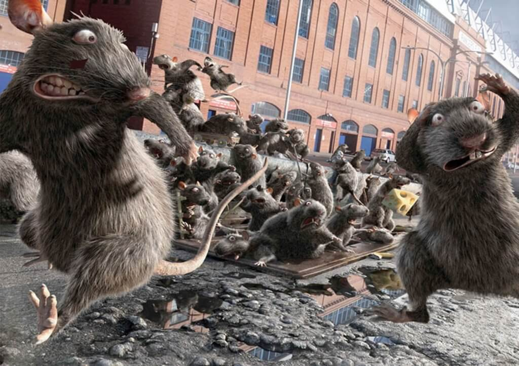 Pittsburgh Rat And Rodent Control Pestco