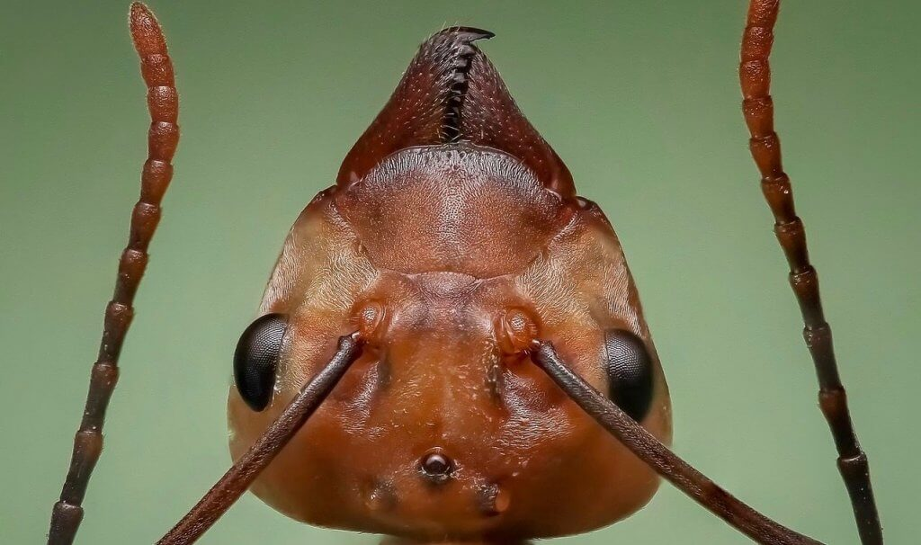 Pittsburgh Ant Control For Businesses
