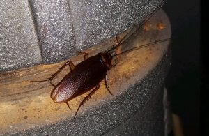 Pestco Pittsburgh Cockroach Removal For Businesses