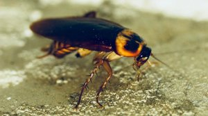 Pittsburgh Stored Product Pest Control