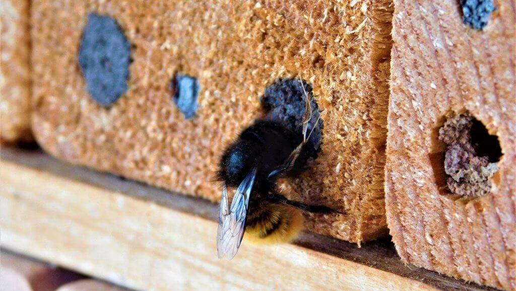 Carpenter Bee Control Pittsburgh Pennsylvania