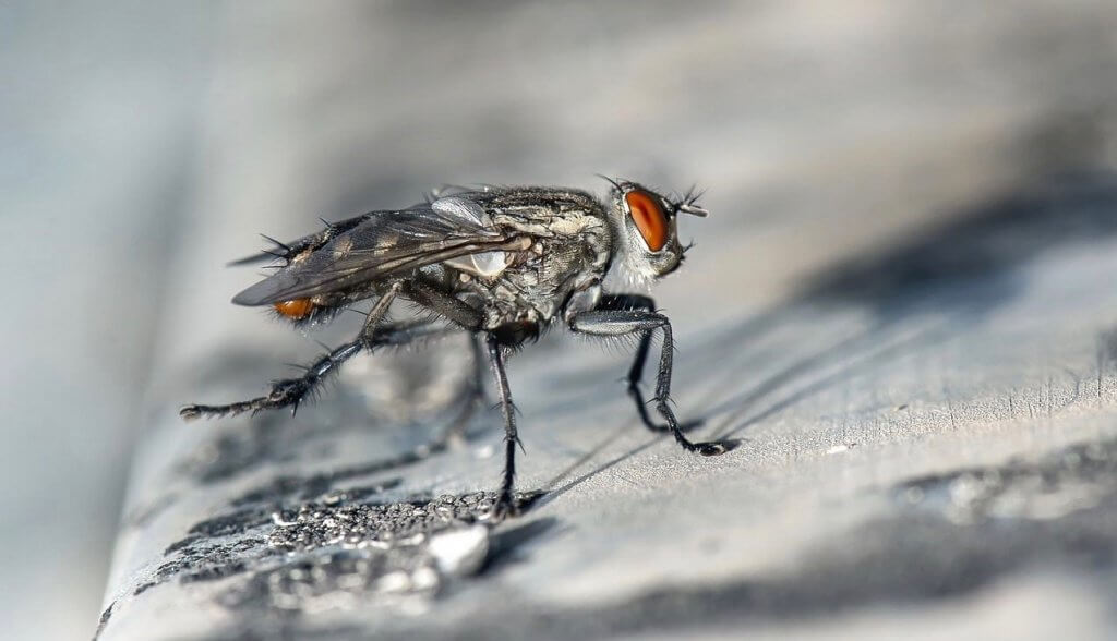 Pittsburgh Professional Fly Control And Prevention