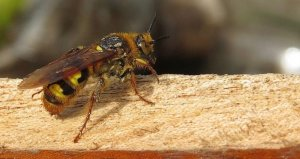 Pennsylvania Stinging Insect Pest Control