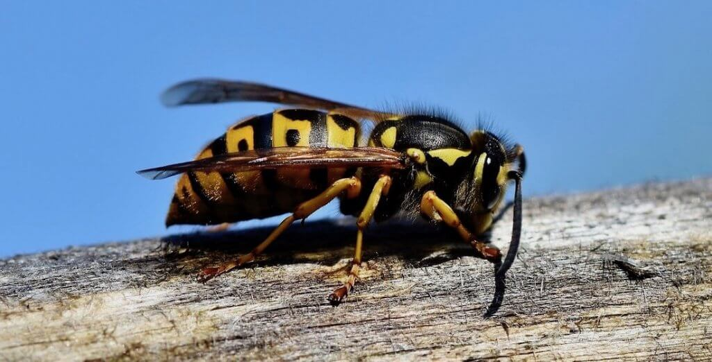Pittsburgh Spring Time Pest Control Services