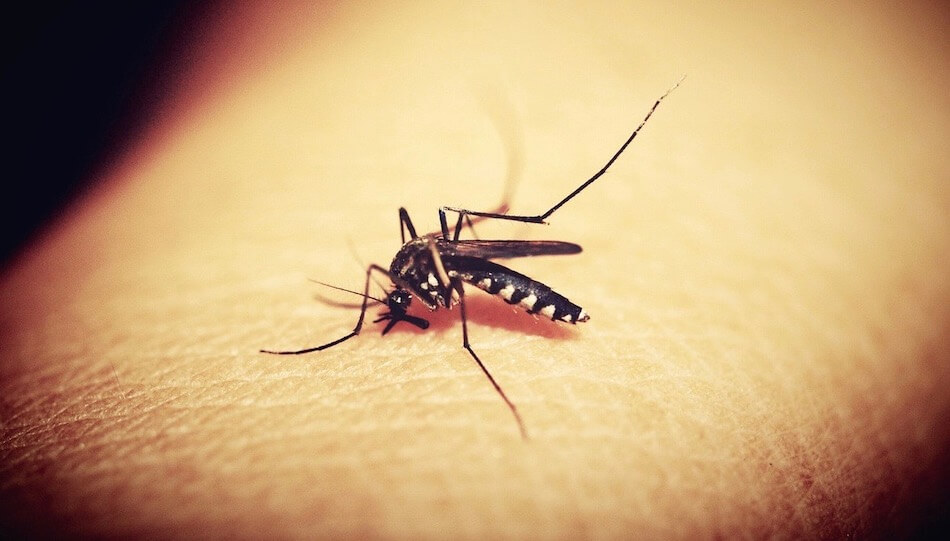 Mosquito Control Services For Pittsburgh Residences