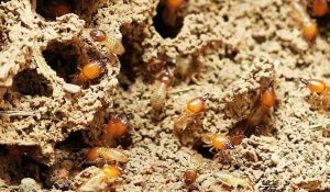 Pittsburgh Best Termite Control Services