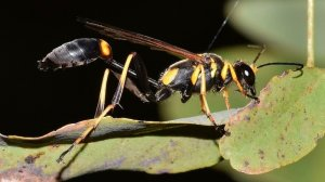Pittsburgh Mud Wasp Removal Services