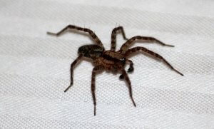 Pittsburgh House Spider Control