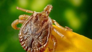 Pittsburgh Residential Tick Control