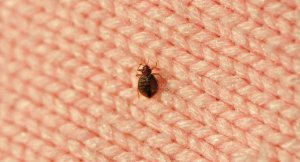 Pittsburgh and Bedbug Infestations