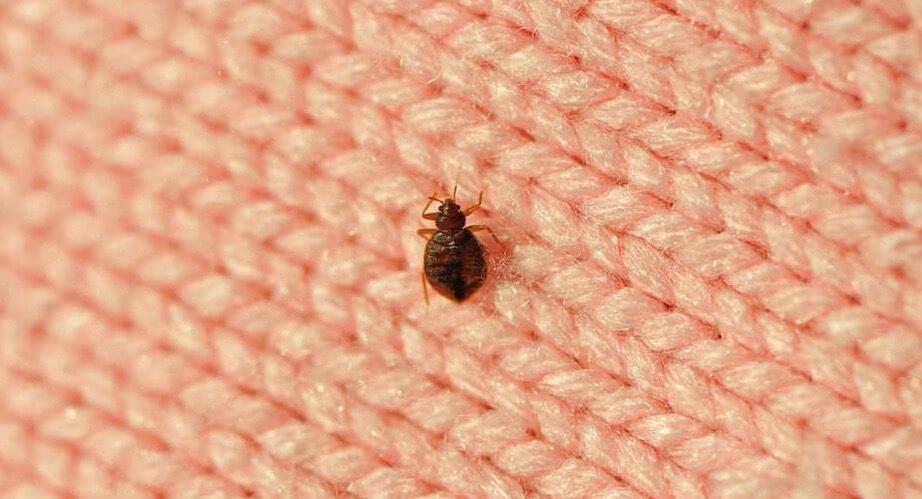 Pittsburgh and Bedbug Infestations