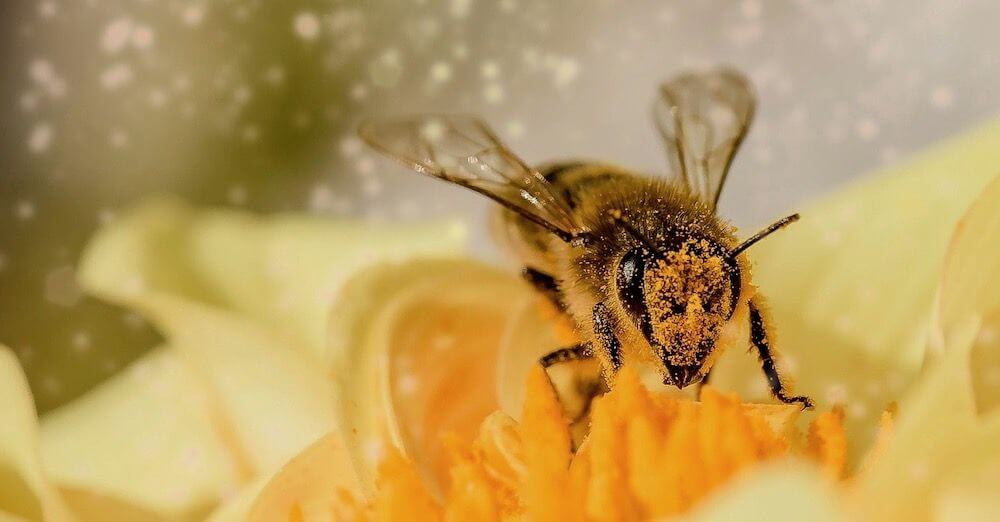 Honey Bee Hive Relocation