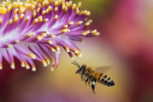 Importance Of Pollinator Bees