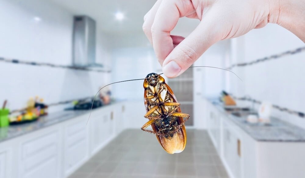 How To Choose A Pest Control Company