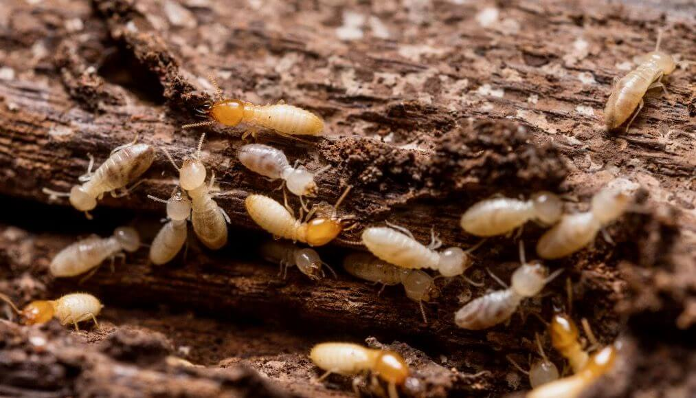Pittsburgh Winter Termite Control