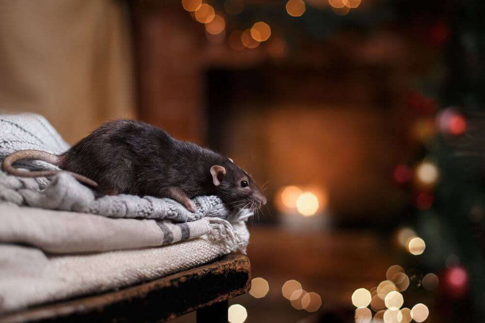 Residential winter pest control tips
