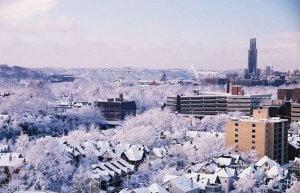 Pittsburgh Winter Termite Pest Management