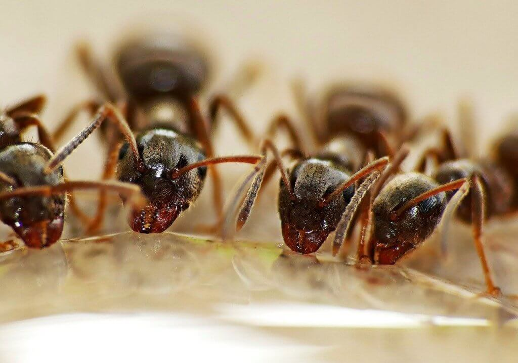 Pittsburgh Residential Ant Control