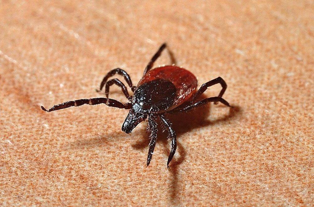 Pittsburgh Lyme Disease
