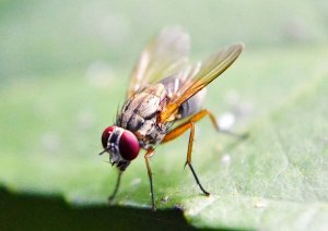 Pittsburgh Fruit Fly Control
