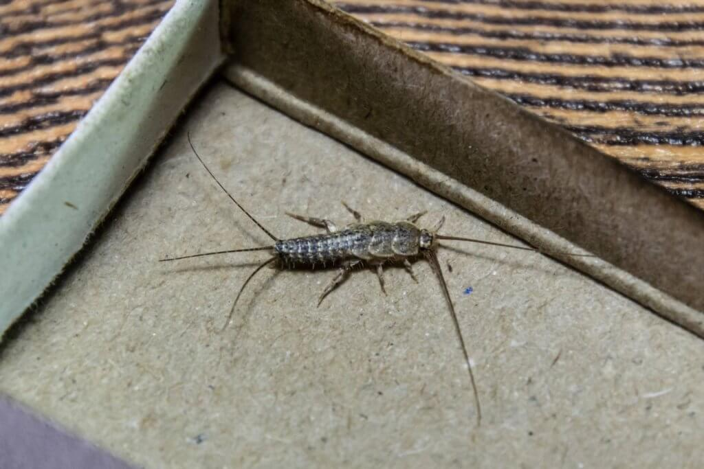 Pittsburgh Silverfish Extermination