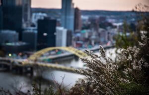 Pittsburgh Winter Pest Control Services