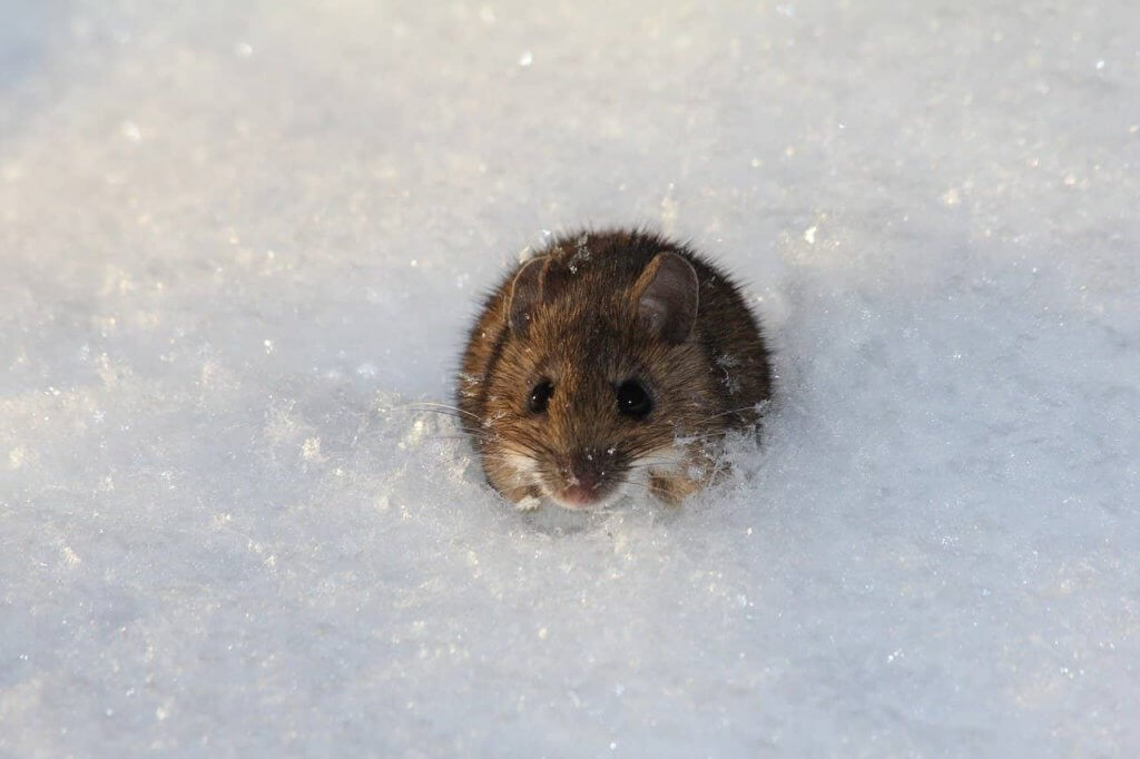Winter Pest Control Pittsburgh Homes