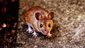 Winter Pests Homeowners