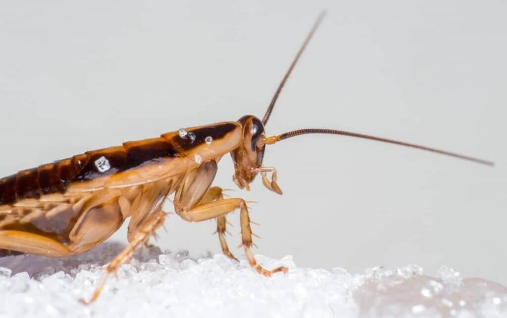 Business Pest Control Tips