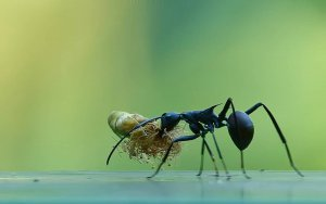 Carpenter Ant Control Pittsburgh